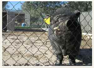 animales granja escuela